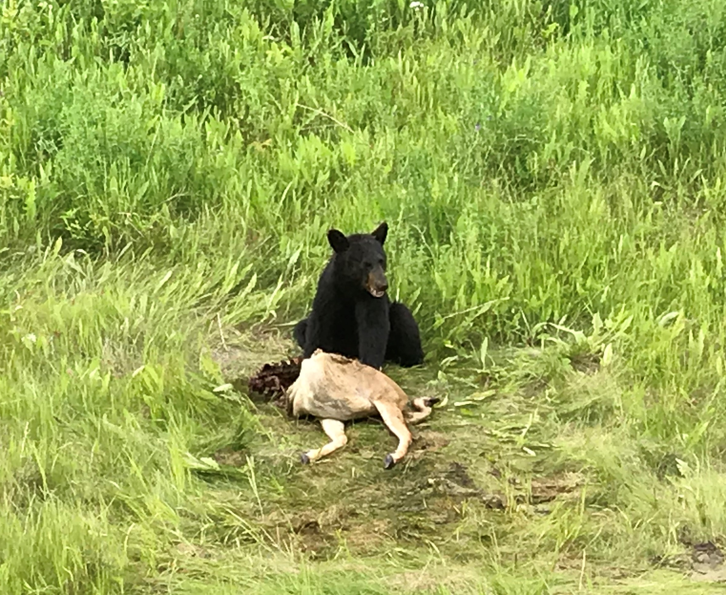 Good days and bad days bear and deer