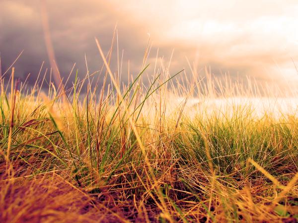 dry_grass_w_green-resized-600