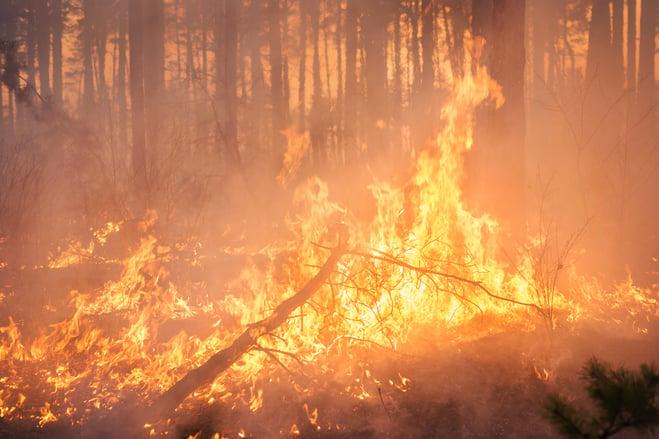 wildfire_closeup
