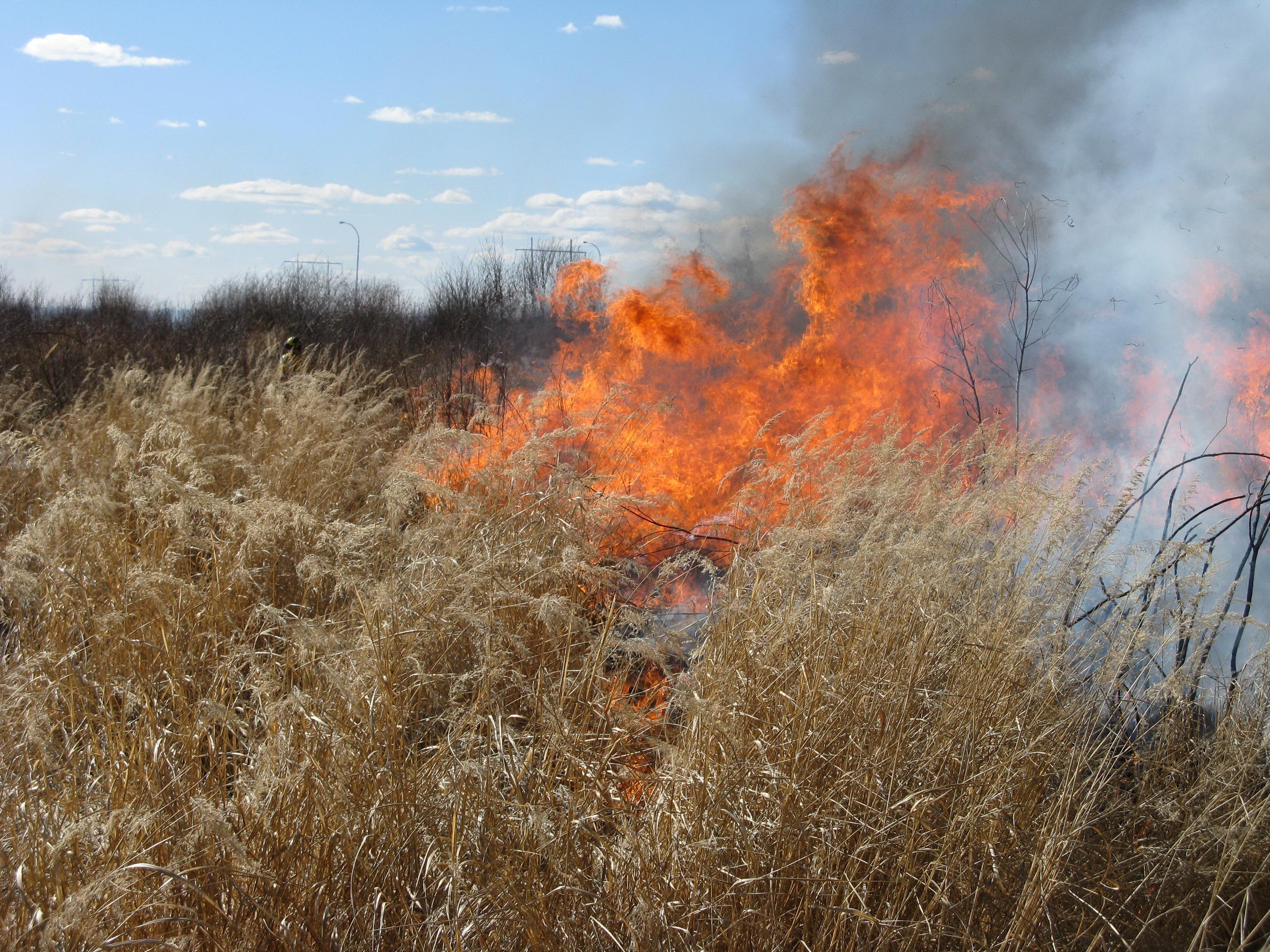 Grass_burning