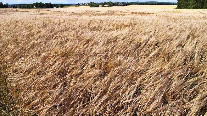 winds_in_dry_grass