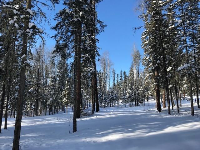 winter_centennial_park.jpg